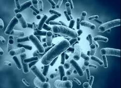 細菌の構造