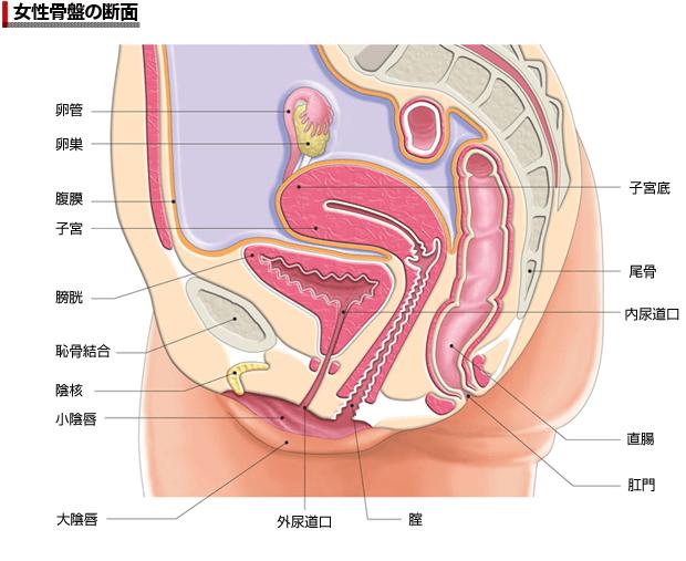 膀胱炎を繰り返すのは女性の尿道の長さが原因