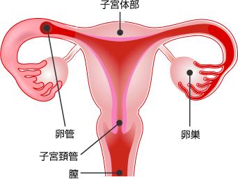クラミジアの女性の症状 出血
