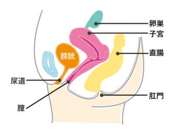 クラミジアの女性の症状 膀胱炎