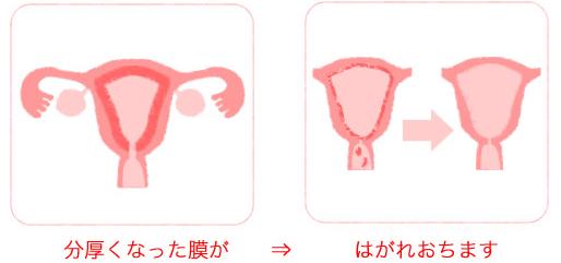 生理中の子宮癌検診
