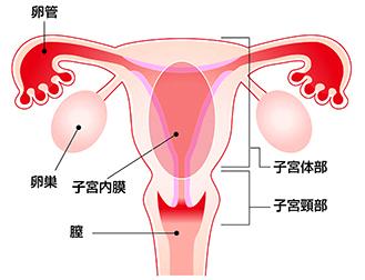 子宮筋腫の原因は性行為(性交渉)...