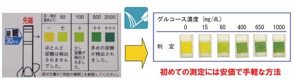 尿検査の項目と数値の見方 2