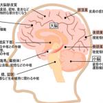 脳梗塞後遺症の症状まとめ!しびれ・めまい・認知症・言語障害など