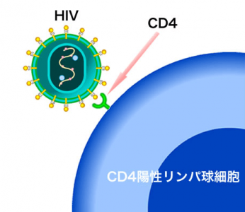 HIV感染症初期症状が治まった後の経過と症状