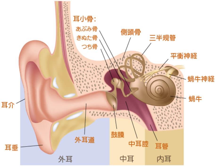 内耳の解剖図
