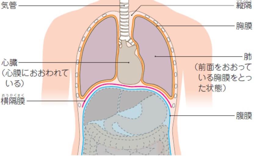 腹膜の位置