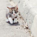 パルボウイルス感染した猫の症状や治療方法は?人に感染することはある?