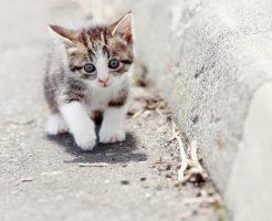 パルボウイルス感染した猫の症状や治療方法